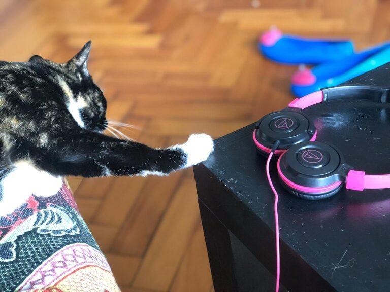 Participación en el podcast «Un gato me salvó la vida»